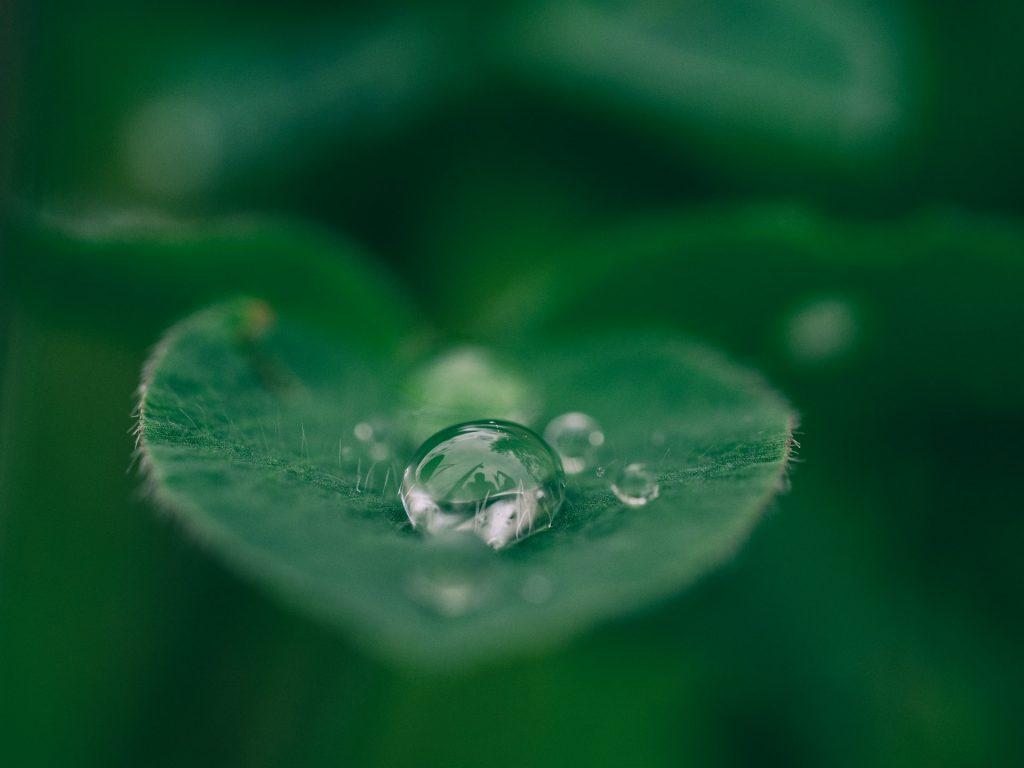 Folha verde com gota de água